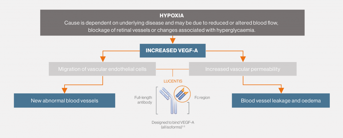 Diagram showing how LUCENTIS targets VEGF-A in the angiogenic cascade